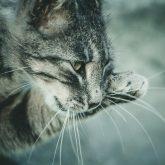 Cat portrait close up