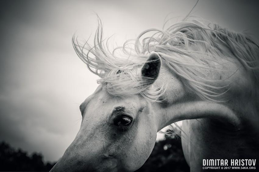 Shaggy morning horse photography equine photography animals  Photo