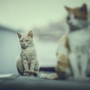 Sitting cat – cinematic colors