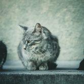 Cute beautiful grey cat