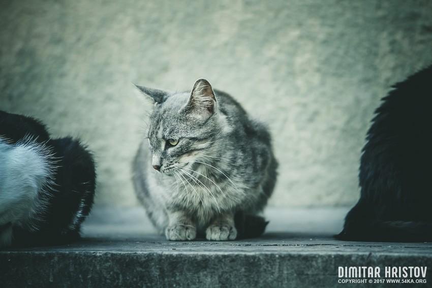 Cute beautiful grey cat photography animals  Photo
