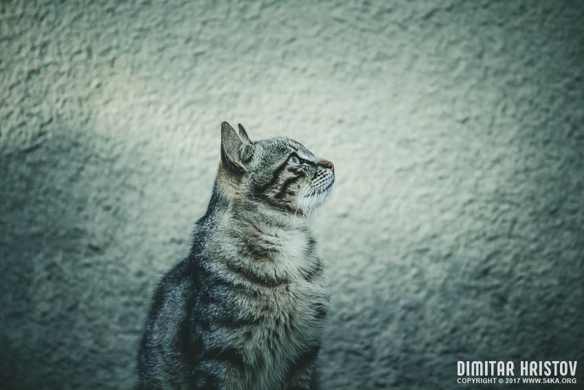 Cute grey cat photography animals  Photo