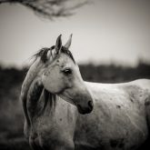 White horse autumn portrait