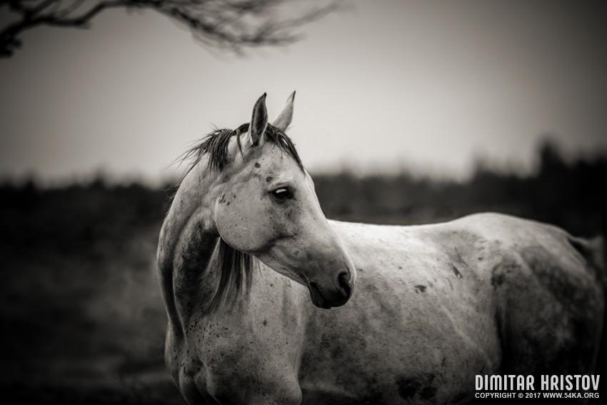 White horse autumn portrait photography equine photography animals  Photo