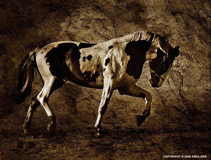 Horses II photography photomanipulation featured equine photography animals  Photo