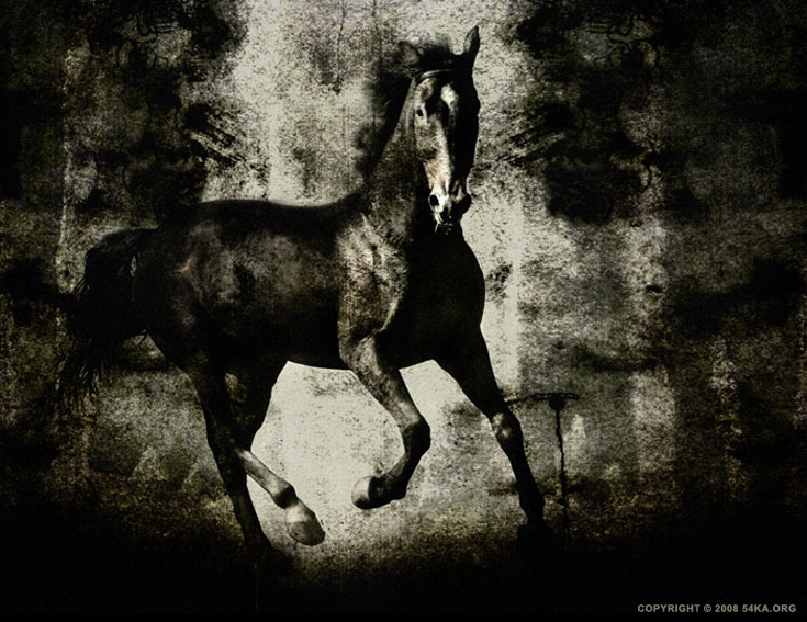 Horses III photography photomanipulation equine photography black and white animals  Photo