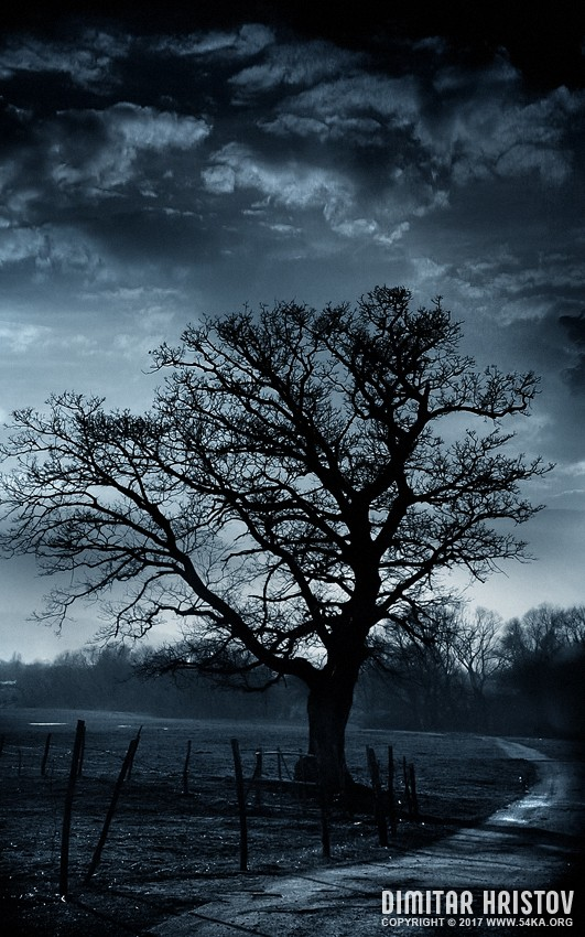 Treestory photography photomanipulation landscapes  Photo