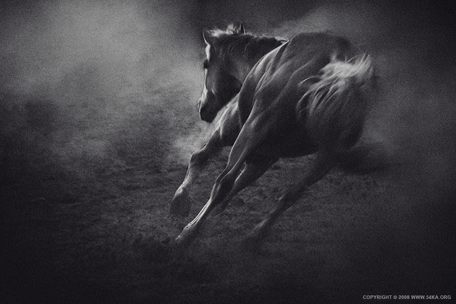 The Wild Wind photography featured equine photography black and white animals  Photo