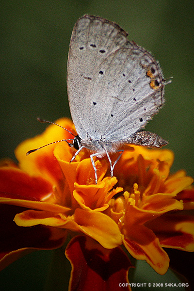 Butterfly photography macro featured animals  Photo