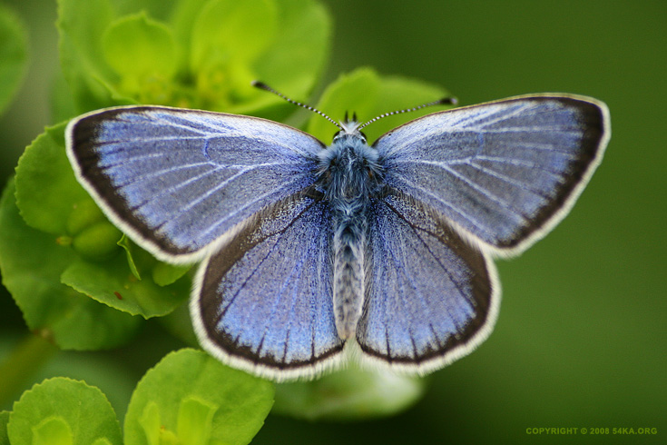 Butterfly blue photography macro animals  Photo