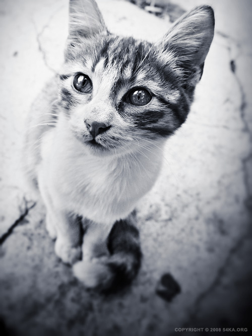 Whiskers photography black and white animals  Photo