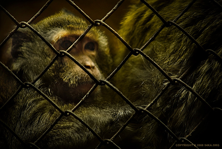 Life Behind Bars photography animals  Photo
