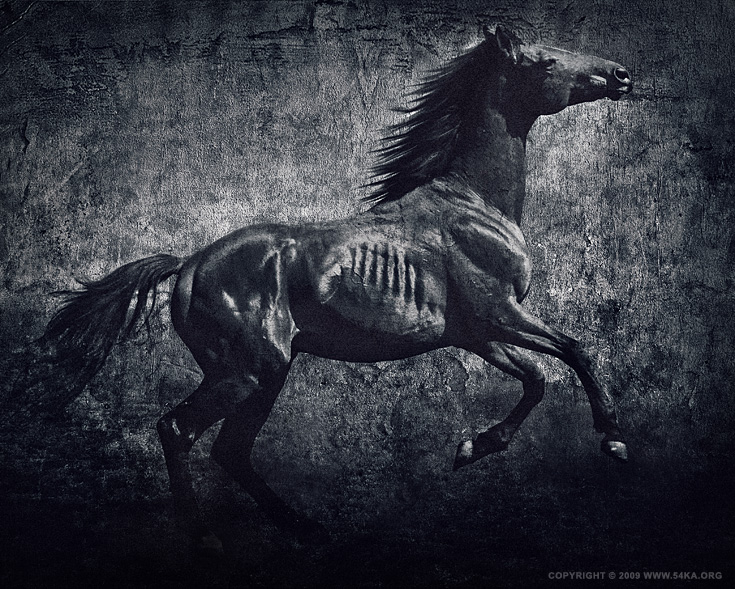 Horses VII photography photomanipulation equine photography daily dose black and white animals  Photo