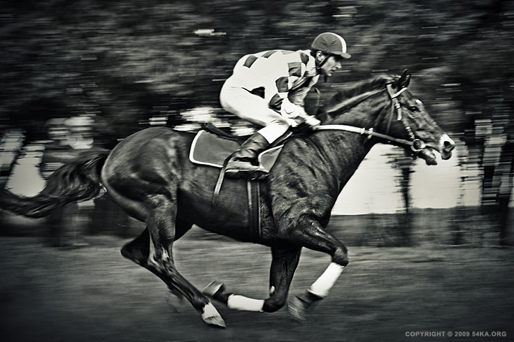 Competition photography equine photography black and white animals  Photo