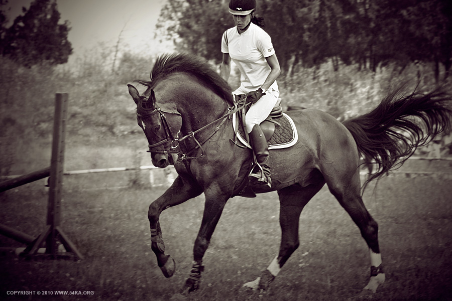 Horse Rider Women XI photography equine photography black and white animals  Photo