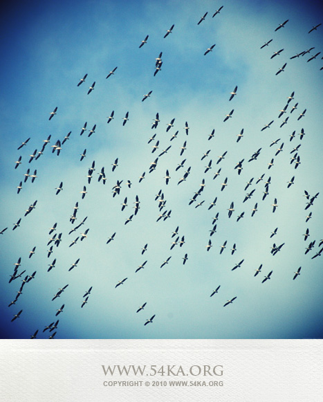 Fly Away photography animals  Photo