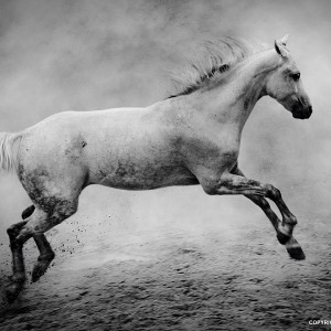 The White Horse II
