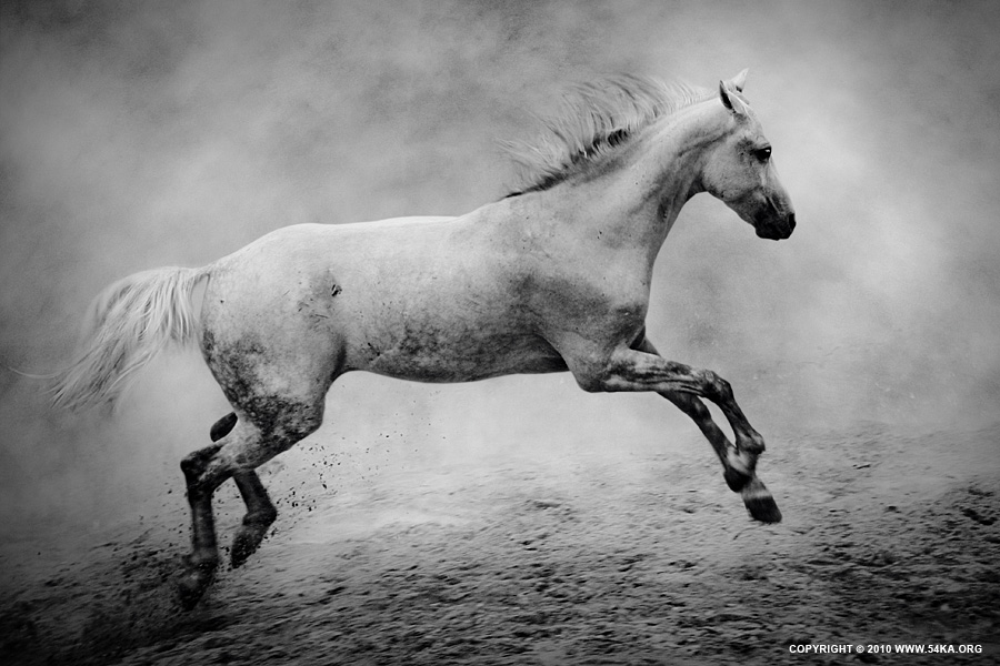 The White Horse II photography photomanipulation featured equine photography black and white animals  Photo