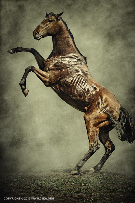 The Champion photography photomanipulation featured equine photography animals  Photo