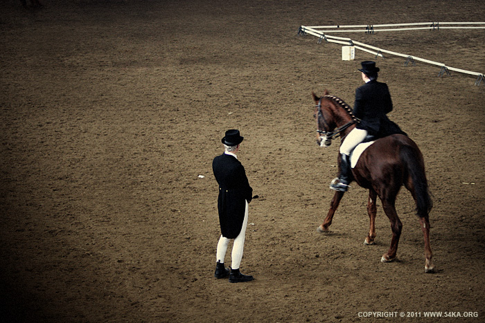 Dressage Horse Riding 54ka Photo Blog