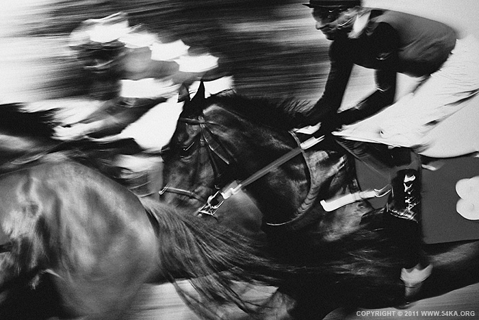 Final elan photography featured equine photography black and white animals  Photo