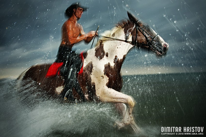 The Storm photography featured equine photography animals  Photo