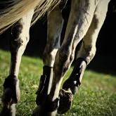 Horse detail II