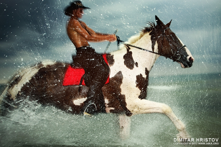 The Storm III photography featured equine photography animals  Photo