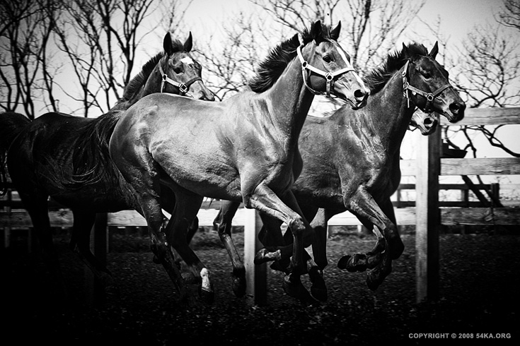 Galloping horses photography equine photography daily dose black and white animals  Photo