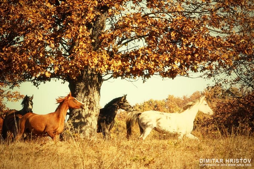 Autumn Horses Ii 54ka Photo Blog