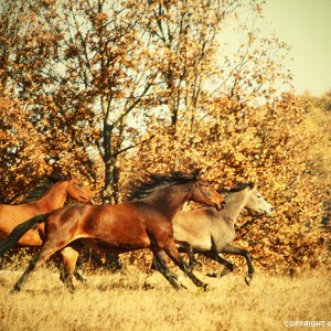 Autumn Horses IV