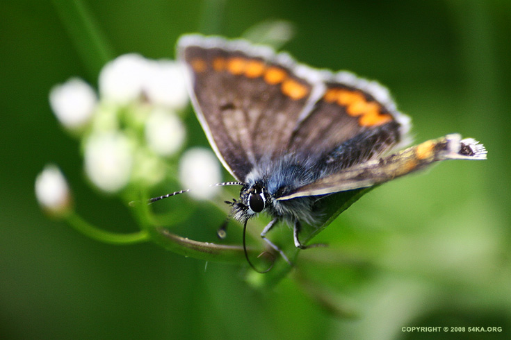 Butterfly V photography macro animals  Photo