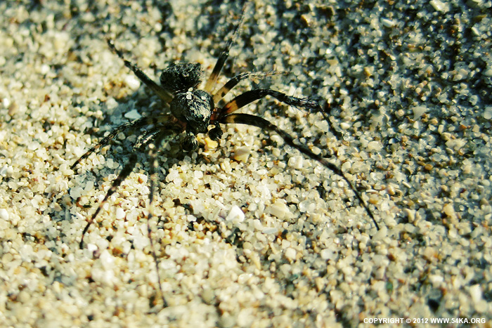 Spider photography macro animals  Photo