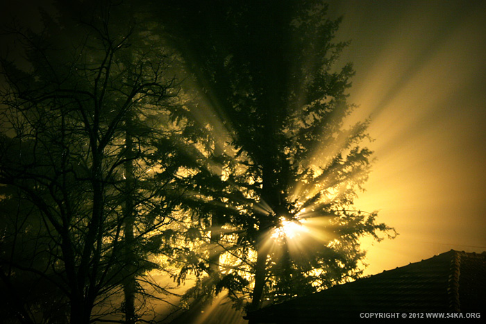 Tree Night Light photography landscapes  Photo