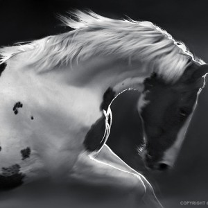 My Lovely Horse