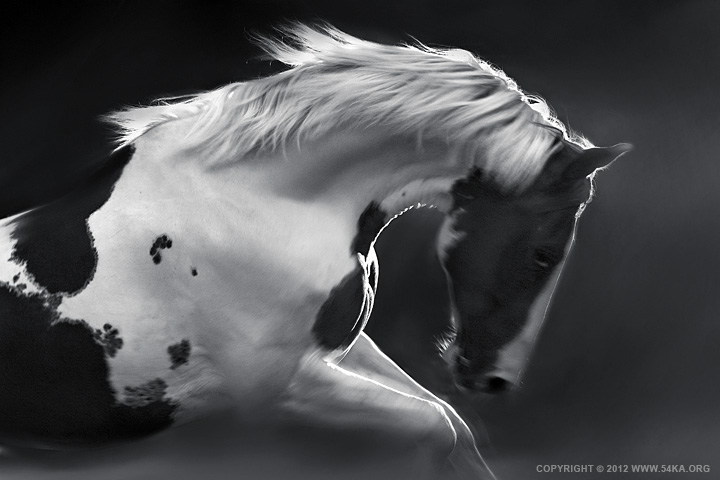 My Lovely Horse photography featured equine photography black and white animals  Photo