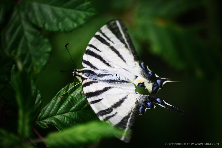 Butterfly VI photography macro animals  Photo