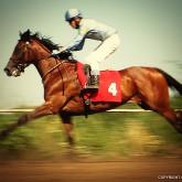 Horse Racing III