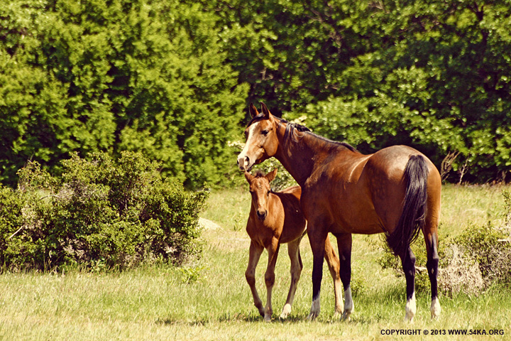 Mare With Foal photography equine photography daily dose animals  Photo