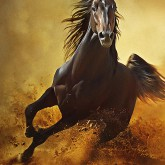 Galloping Horse at Sunset in Dust
