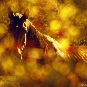 Brown Horse Portrait In Summer Day