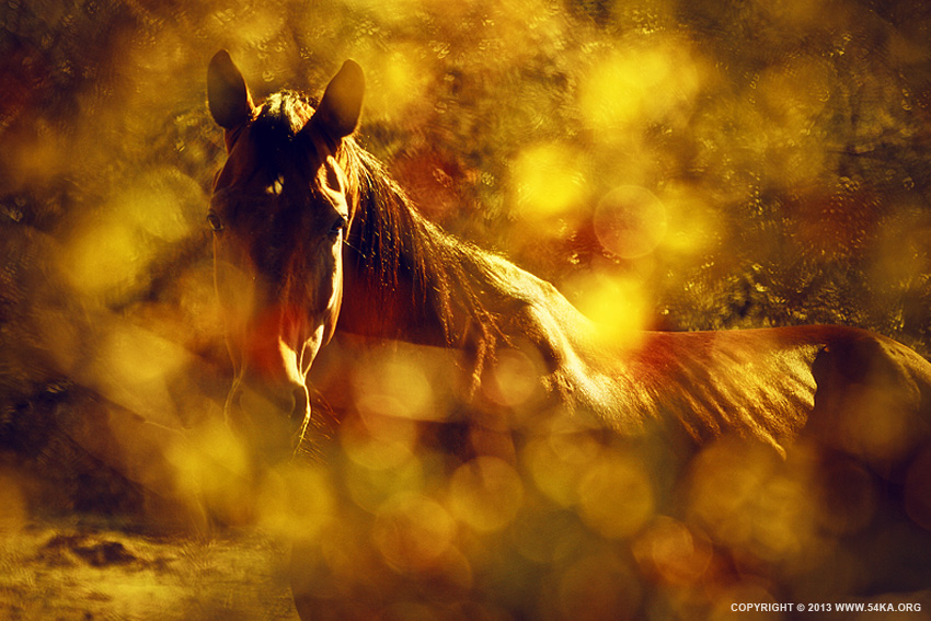 Brown Horse Portrait In Summer Day photography featured equine photography animals  Photo