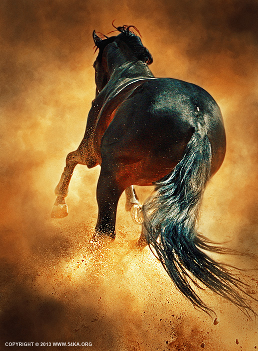 Hooves Of Flaming Horse photography photomanipulation featured equine photography animals  Photo