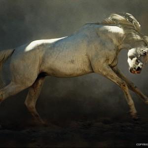 Mad Horse