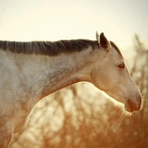 Winter Horse On The Sunset Sky