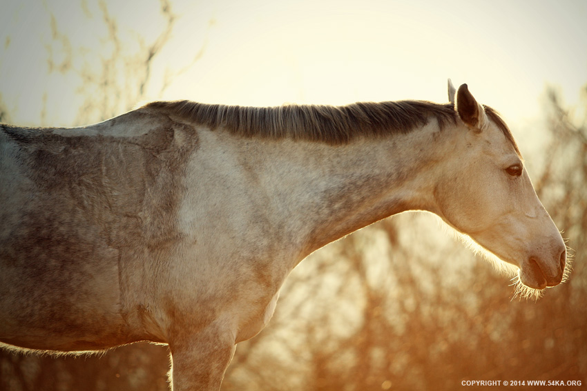 Winter Horse On The Sunset Sky photography featured equine photography animals  Photo