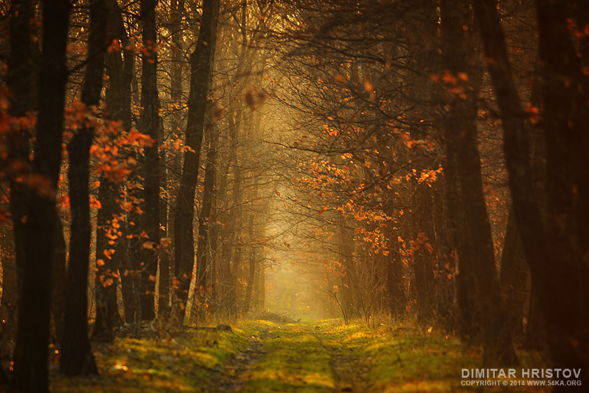 Forest Leaves photography landscapes top rated featured  Photo