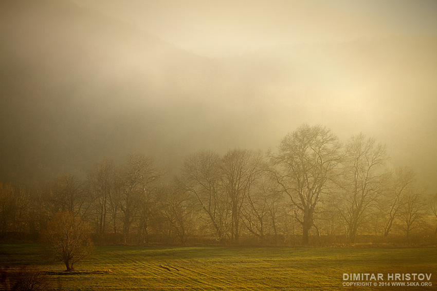 Misty Morning in The Wood photography landscapes featured  Photo