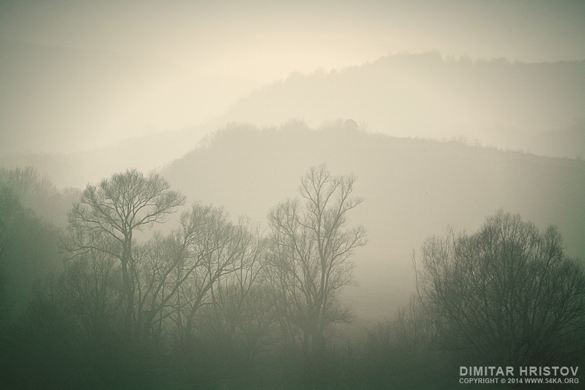 The Misty Forest photography landscapes featured  Photo
