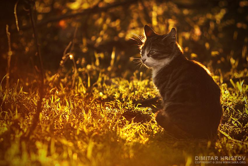 Little Kitten photography animals  Photo